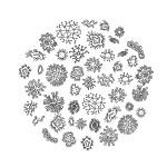 Mikrobiota.jak-zmniejszyc-fotke_pl